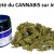 Achat de cannabis medical